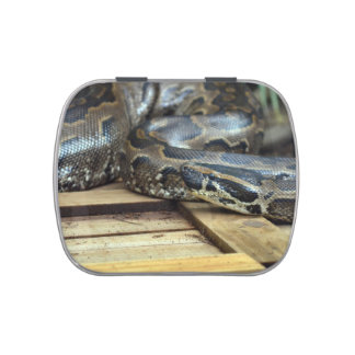 python snake looking left on wooden crate jelly belly candy tin