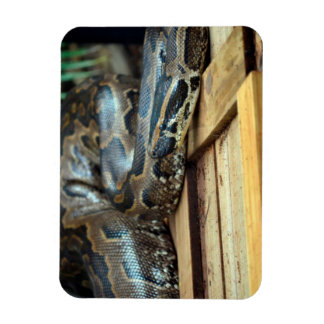 python snake looking left on wooden crate magnet