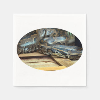python snake looking left on wooden crate napkin