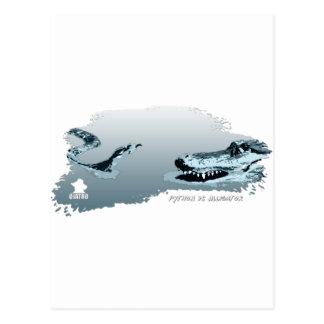 Python vs Alligator blue 02 Postcard
