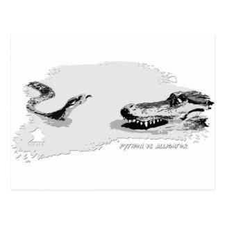 Python vs Alligator grey 02 Postcards