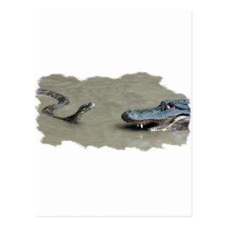 Python vs Alligator Postcard