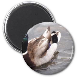 Quack 2 Inch Round Magnet