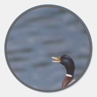 Quack up classic round sticker