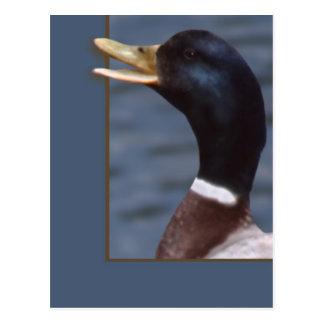 Quack up postcard