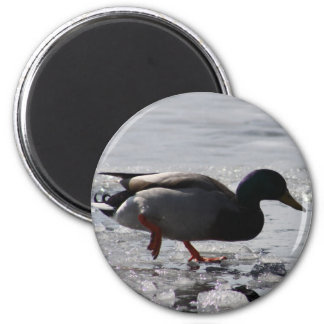 Quacked Ice Magnet