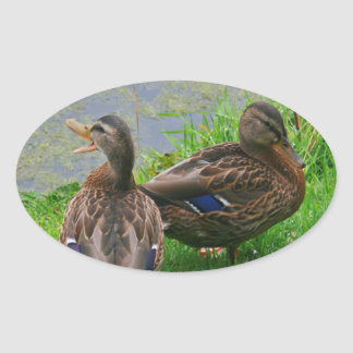 Quacking Duck Oval Sticker