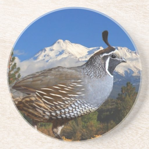 QUAIL AND MOUNT SHASTA DRINK COASTER