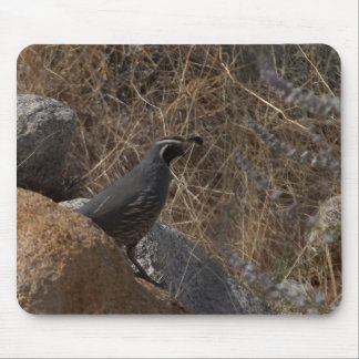 Quail Bird In The Desert Mouse Pad