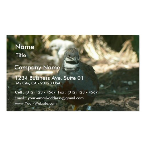 Quail Double Sided Standard Business Cards Pack 100