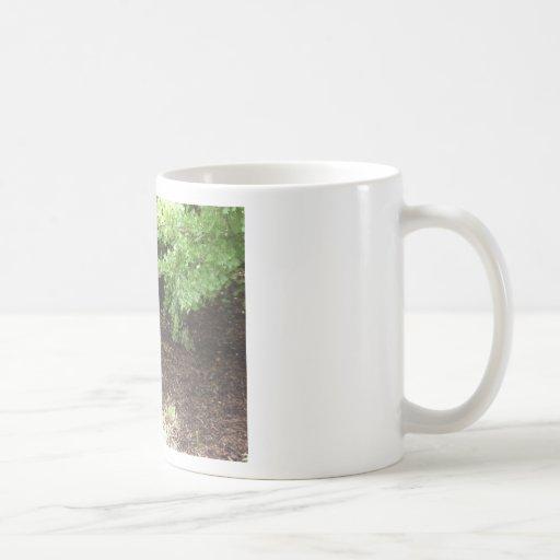 Quail, fighting coffee mug