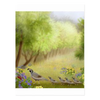 Quail in a Meadow Postcard