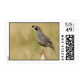Quail Postage Stamp
