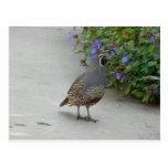 quail postcard