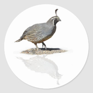 QUAIL REFLECTED CLASSIC ROUND STICKER