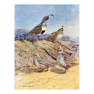 Quails by Allan Brooks Postcard