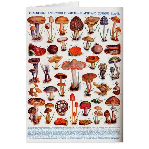 Quaint and Curious Toadstools Greeting Card