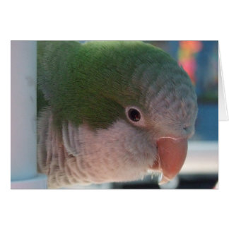 Quaker Parakeet Greeting Card