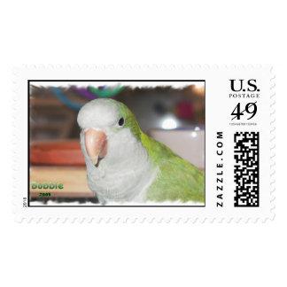 Quaker Parakeet Stamp