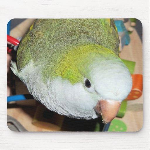 Quaker Parrot Mouse Pad