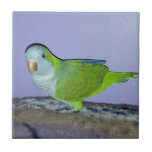 Quaker Parrot Small Square Tile