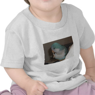 quaker parrot t shirts