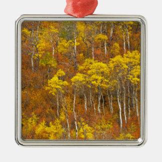 Quaking aspen grove in peak autumn color in 2 metal ornament