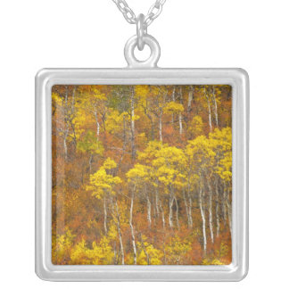 Quaking aspen grove in peak autumn color in 2 silver plated necklace