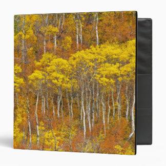 Quaking aspen grove in peak autumn color in vinyl binder