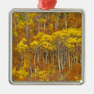 Quaking aspen grove in peak autumn color in metal ornament