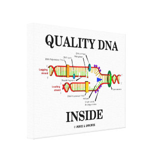 Quality DNA Inside (DNA Replication) Canvas Print