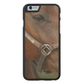 quarter-horse-6 funda de iPhone 6 carved® de arce