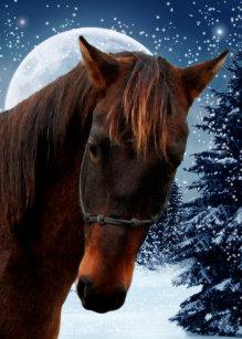 quarter horse christmas card - Horse Christmas