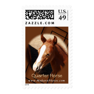 Quarter Horse colt stamp- personalize Stamp