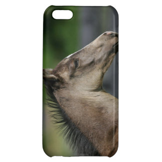 Quarter Horse Foal Headshot Cover For iPhone 5C