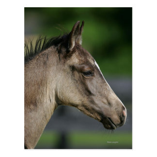 Quarter Horse Foal Headshot Postcard