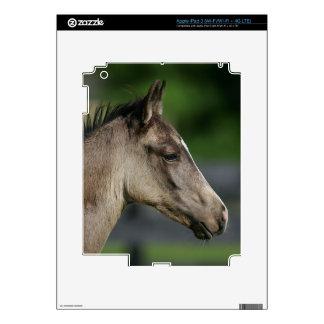 Quarter Horse Foal Headshot Skin For iPad 3