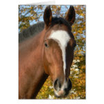 Quarter Horse Greeting Card