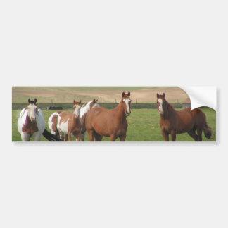 Quarter Horse Herd Bumper Stickers