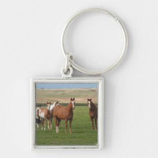 Quarter Horse Herd Keychain