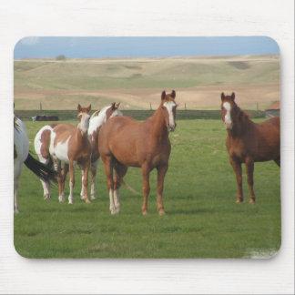 Quarter Horse Herd Mouse Pad