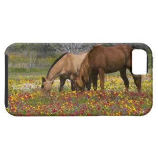 Quarter Horse in field of wildflowers near Cuero iPhone 5 Case