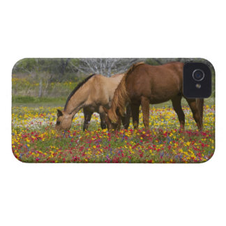 Quarter Horse in field of wildflowers near Cuero iPhone 4 Covers