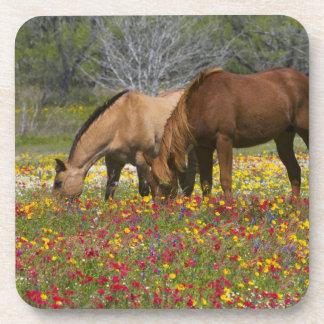 Quarter Horse in field of wildflowers near Cuero Drink Coaster