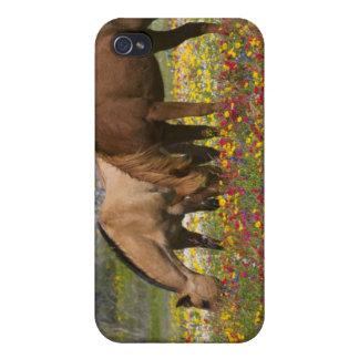 Quarter Horse in field of wildflowers near Cuero iPhone 4 Cover