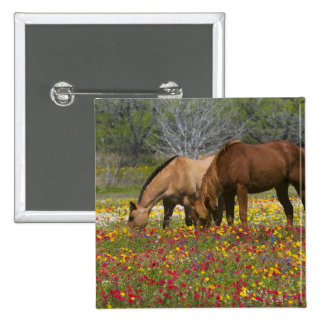 Quarter Horse in field of wildflowers near Cuero Pinback Button