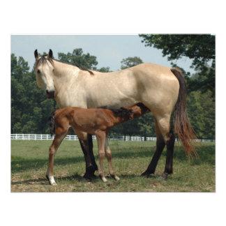 Quarter Horse Mare Foal Invites