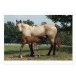 Quarter Horse Mare & Foal Post Card