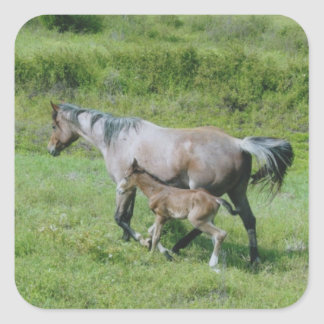 Quarter Horse Mare with Foal at Side Square Sticker