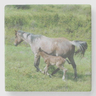 Quarter Horse Mare with Foal at Side Stone Coaster